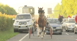 IrelandsSulkyRacers121015_large
