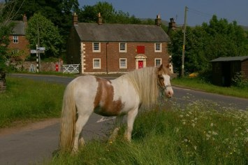 Traveller's_Horse_on_Melmerby_Village_Green_-_geograph.org.uk_-_228318