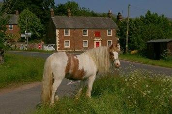 Traveller's_Horse_on_Melmerby_Village_Green_-_geograph.org.uk_-_228318